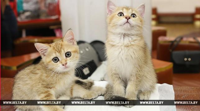 Котята Бонни и Клайд