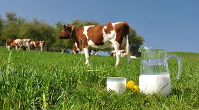 Брестская и Пензенская области намерены развивать сотрудничество в животноводстве