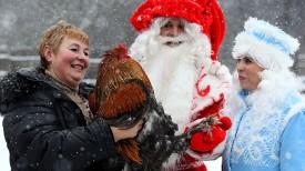 Жительница деревни Азино Полоцкого района Марина Костык знакомит Деда Мороза и Снегурочку с символом 2017 года