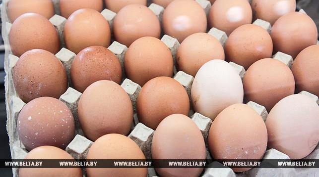 В Брестской области к 2020 году производство яиц достигнет 500 млн штук в год
