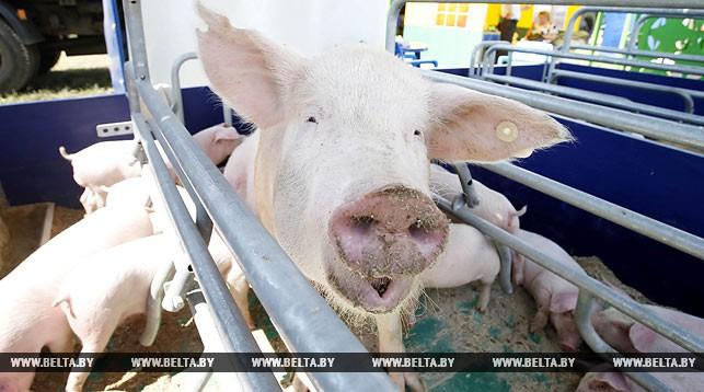 В Брестской области выводят из оборота неэффективные свинокомплексы