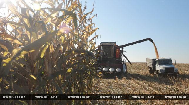 Во время уборки кукурузы. Фото из архива