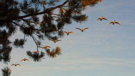 Перелетные птицы. Фото из архива