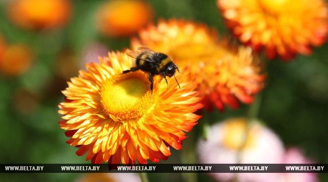 Пчела. Фото из архива
