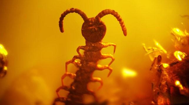 """Фото из VK-аккаунта Выставка """" Доисторические насекомые в янтаре"""" (ООО""""Инклюз"""")"""