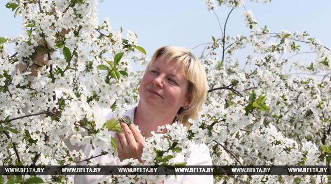 Вишнево-черешневый сад высадят в Бресте к 1000-летию города