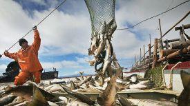Фото с сайта fishnews.ru