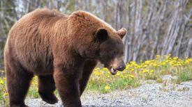 Фото bearworld.ru