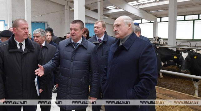 Александр Лукашенко во время посещения фермы