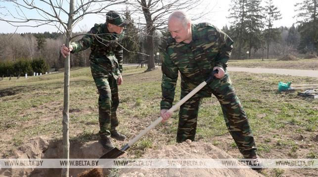 Александр Лукашенко на республиканском субботнике