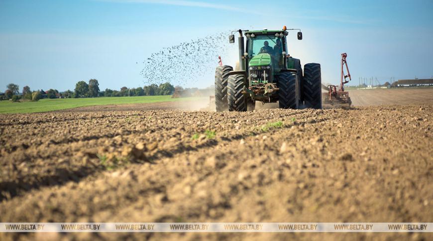 Сев озимых зерновых начался в Беларуси