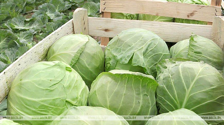 МАРТ: интенсивность роста цен на овощи и фрукты в ноябре значительно снизилась