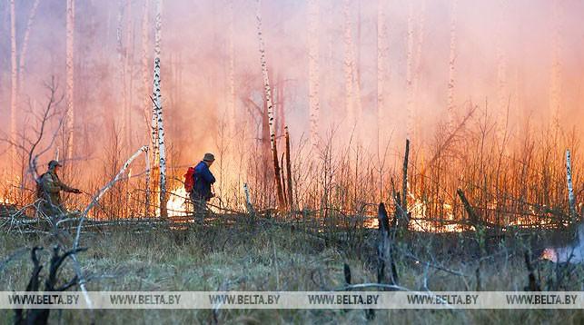Во время тушения пожара на Ольманских болотах. Фото из архива