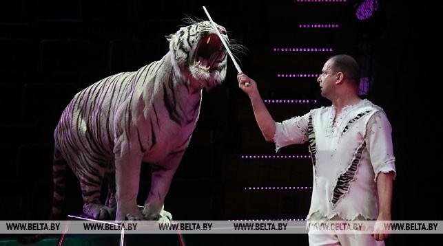 Номер Сергея Нестерова с белыми тиграми