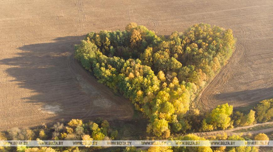До +23°С ожидается по югу Беларуси 19 октября