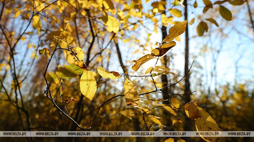 В Беларуси 28 октября похолодает