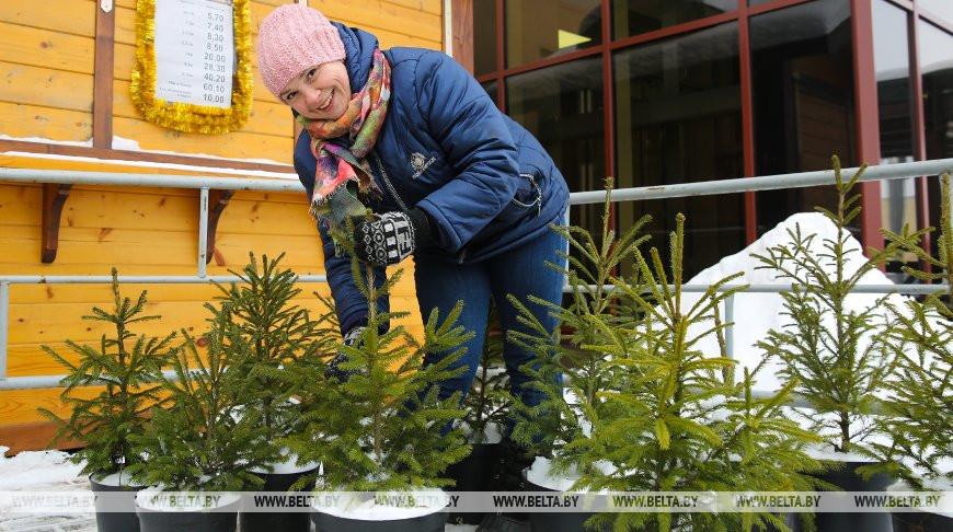 Акция «Сохрани символ праздника» стартует в Беларуси 20 декабря