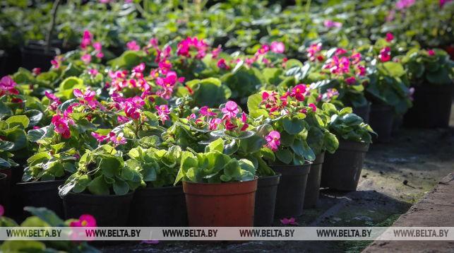 Более миллиона цветов высадят в Бресте к тысячелетию города