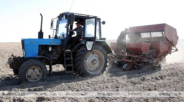 Хозяйства Брестской области завершают посадку картофеля