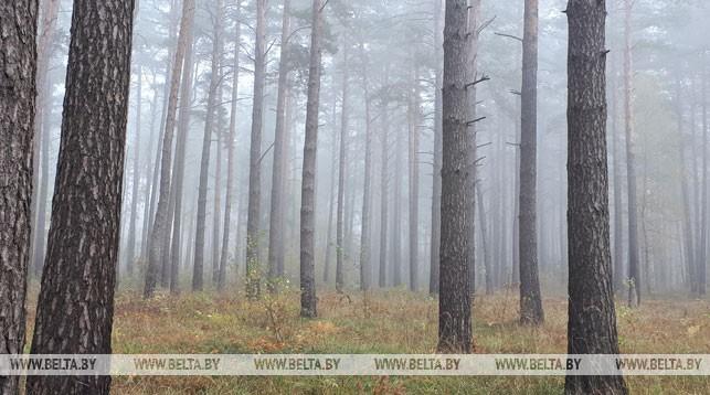 В Брестской области снят запрет на посещение лесов