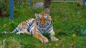 Фото Гродненского зоопарка