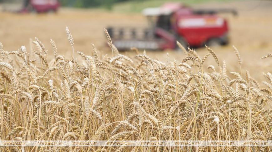 Массовая уборка зерновых набирает темпы в Брестской области