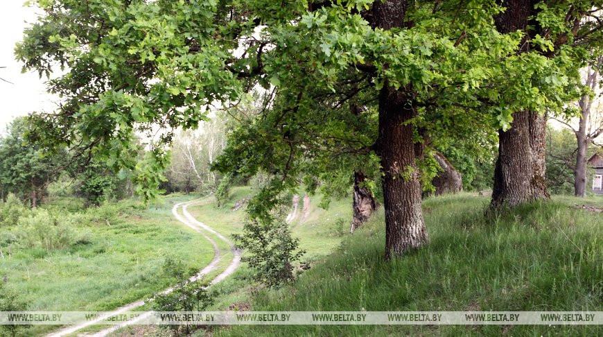 Запрет на посещение лесов введен в двух районах Брестской области