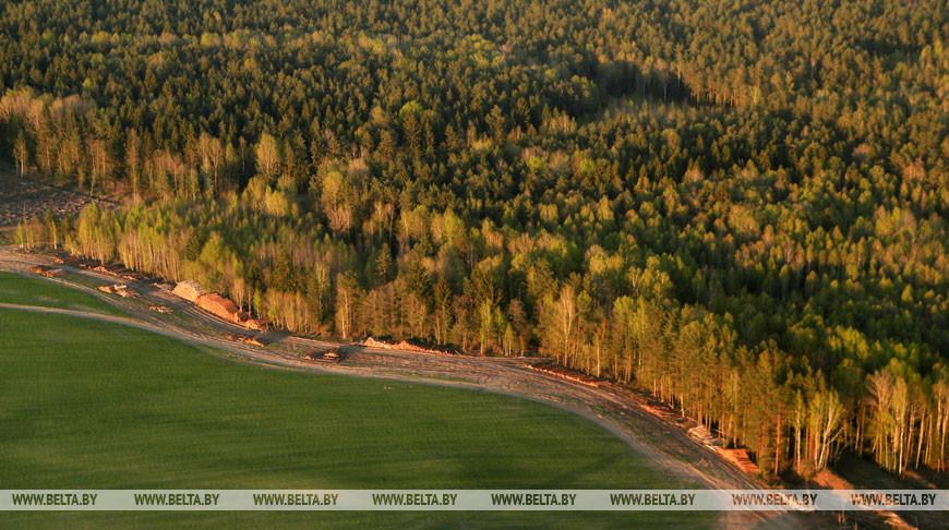 Запрет на посещение лесов введен в половине районов Брестской области