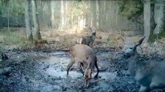 Скриншот из видео национального парка