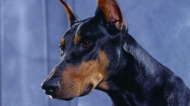 Без поводка и намордника... В Кобрине собака покусала девочку на остановке