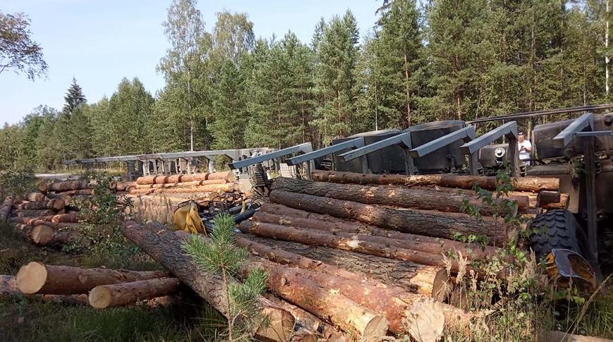 Грузовик с бревнами опрокинулся на лесной дороге в Брестской области