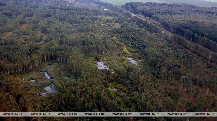 В Пружанском районе две ягодницы заблудились и провели ночь в лесу