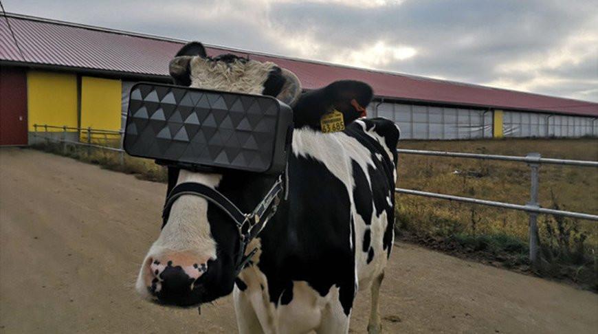 Фото пресс-службы регионального Министерства сельского хозяйства и продовольствия
