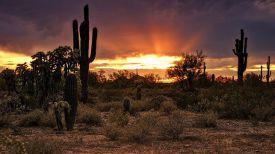 Пустыня Сонора. Фото Яндекс