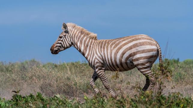 Фото   National Geographic