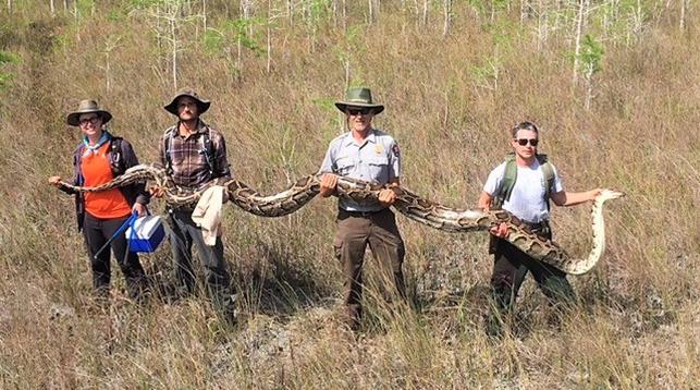 Фото из Facebook-аккаунта Big Cypress National Preserve