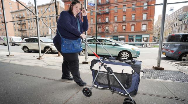 Волонтер из приюта для животных везет Барсика к ветеринару. Фото The New York Post