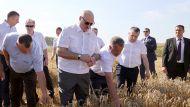 Лукашенко: не надо дергать аграриев на выборы, потерять урожай ради какой-то политики - полный идиотизм