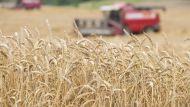 Лукашенко: впереди еще много работы, чтобы убрать богатый урожай и быть уверенными в будущем
