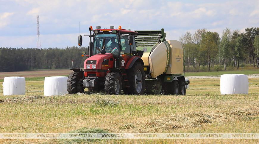Первый укос трав в Беларуси проведен на 12% площадей