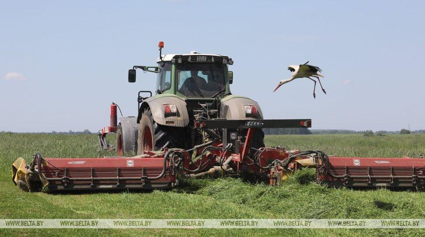Первый укос трав проведен в Беларуси почти на 90% площадей