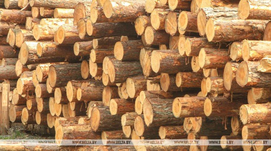 Продажи круглого леса через БУТБ в январе-июле выросли на 27%