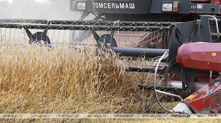 Белорусские аграрии намолотили 7,5 млн т зерна