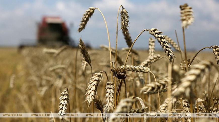 Сельхозфилиалы 'Белтопгаза' завершили уборку зерновых