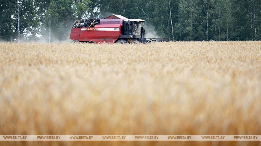 В Беларуси намолотили более 8 млн т зерна