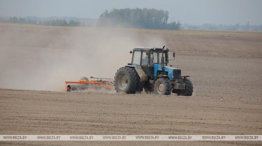 В Беларуси завершается сев озимых зерновых