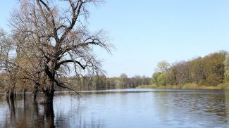 Старое русло реки Сож у деревни Новая Гута Гомельского района. Фото из архива