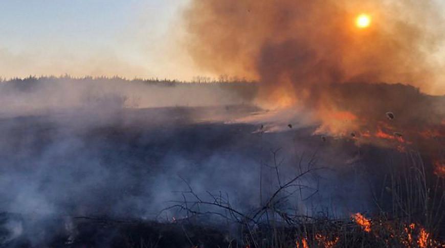 Превышений радиационных параметров из-за пожаров в Чернобыльской зоне не выявлено - Белгидромет