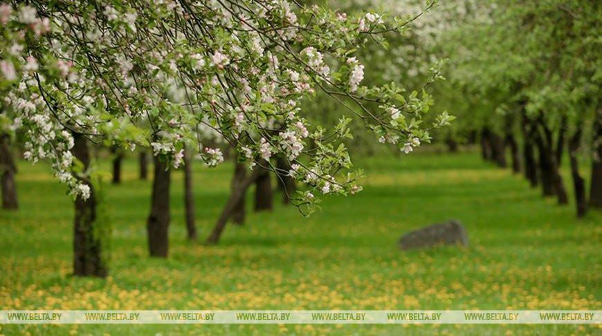 Ночные заморозки до -3°С ожидаются в Беларуси 16 мая