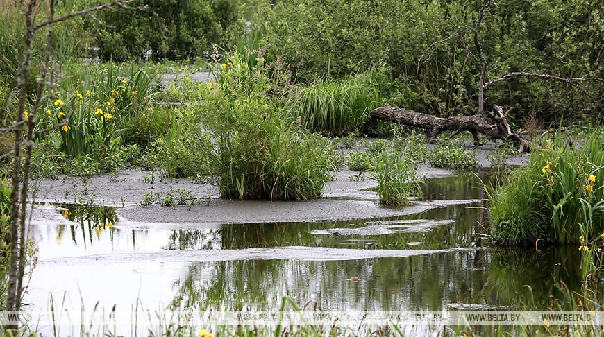 Совмин определил порядок разработки и утверждения планов управления болотами